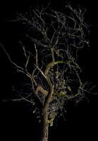 tree49