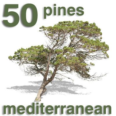 vor_med_pine_old_05_neu.jpg