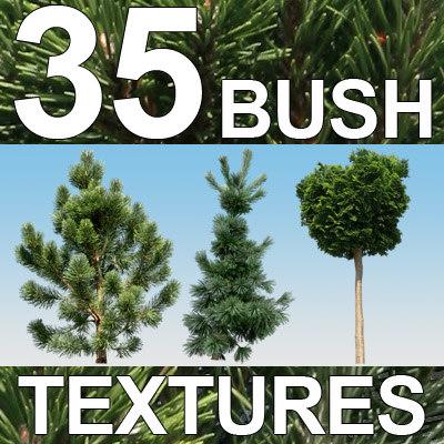 Bush-Textures-1-MASTER.jpg