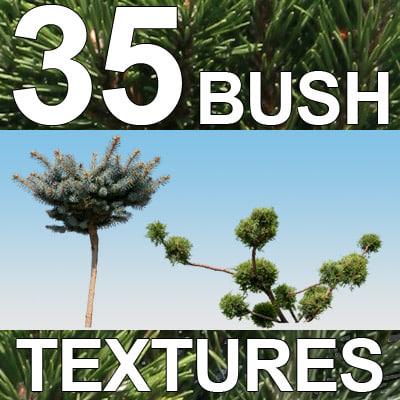 Bush-Textures-2-MASTER.jpg