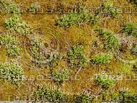 Foliage 11a