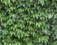 Foliage 52 - Tileable