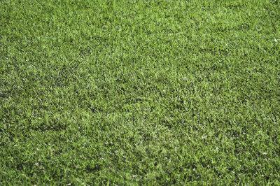 GRASS_A2.jpg
