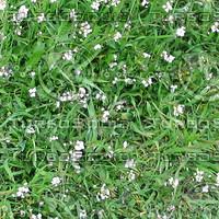 Ground_grass_02.zip