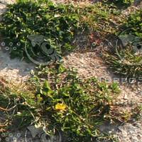Ground_grass_07.zip