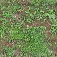 MG_Dirt_Grassy1.jpg