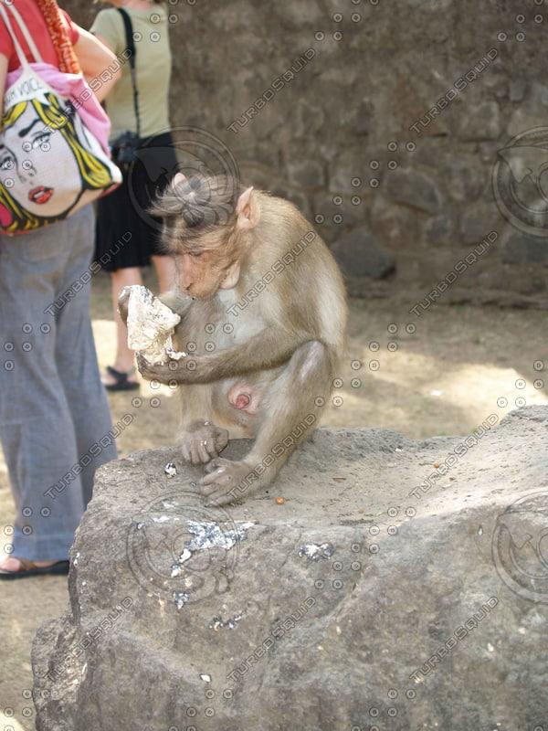 Monkey_15.jpg
