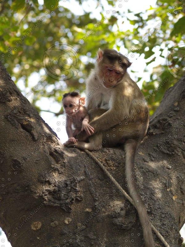 Monkey_7.jpg