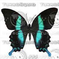 Butterfly Papilio Blumei.psd