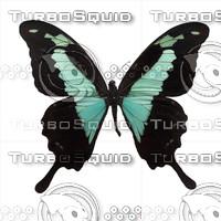 Butterfly Papilio phorcas Longo.psd