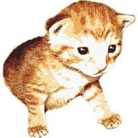 SPV_Kitten002