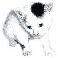 SPV_Kitten003