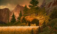 Buffalo in the Rocky Mountains