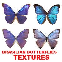 BRASILIAN BUTTERFLIES.rar