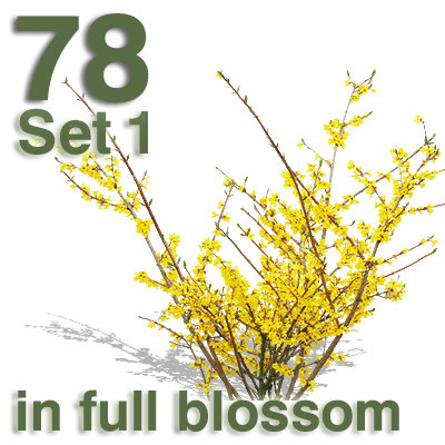 VB_fb_bush_yellow_04_neu.jpg