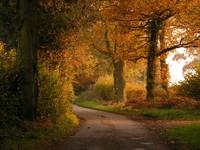 Woodland_01.jpg