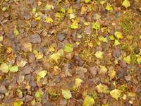 foliage_01.JPG