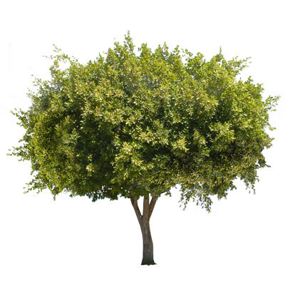 olive-thumb.jpg