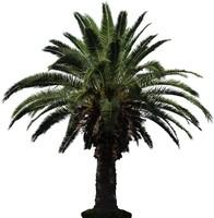 Palm 05
