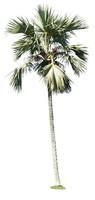 Palm 03