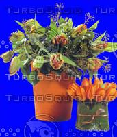 plant_002.jpg