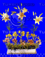 plant_043.jpg