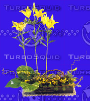 plant_064.jpg