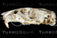 lateral-skull001.jpg