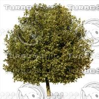 tree#1