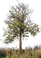 tree41