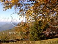 Fall trees stock photo