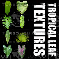 tropical_leaf_textures.zip