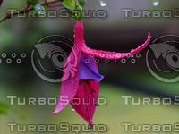 Flower texture photo