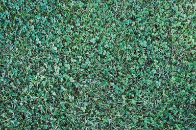 GRASS_A1.jpg