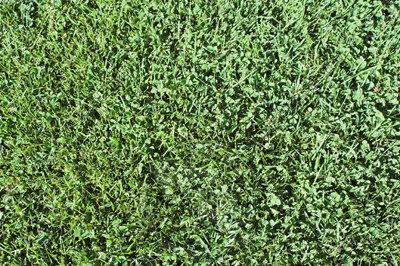 GRASS_A5.jpg