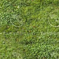 Grass map