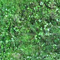Mixed Grass