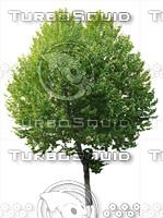 tree#4