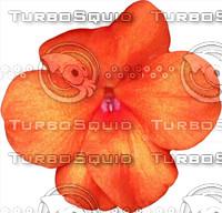 Orange Impatien Flower and Leaf