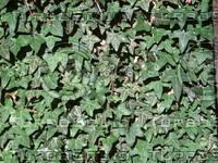 plantwall.zip