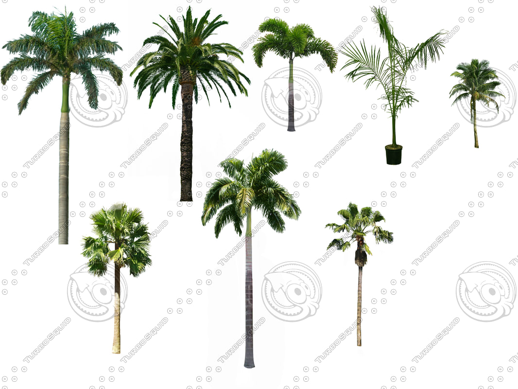 Palm_Package.jpg