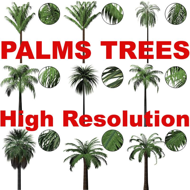 Palm_Textures_Main.jpg