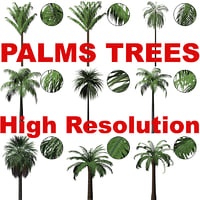 Cut-out Palms High Resolution