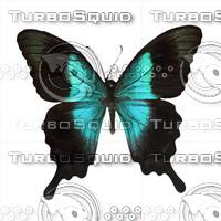 Butterfly Papilio parantus Indonesia.psd