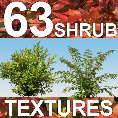 Shrub-Texture-MASTER.jpg