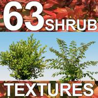 63 Shrub Textures