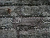 Texture00068.jpg