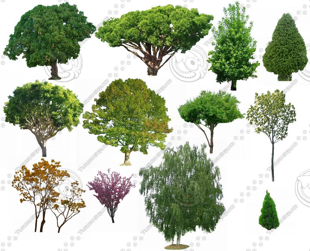 Tree_Package.jpg