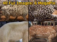 Genuine Animal Fur Pack (40 Images)