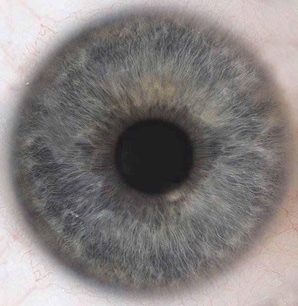 Iris Eye Texture Textu...